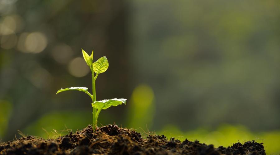 《国家土壤环境监测网农产品产地监测工作方案》发布